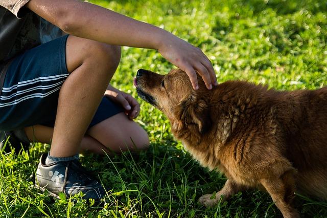 Comment avoir un chien peut améliorer la santé de vos enfants ?