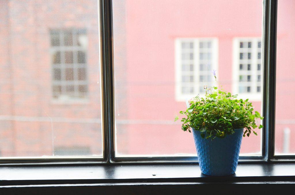 Comment entretenir les plantes en pot
