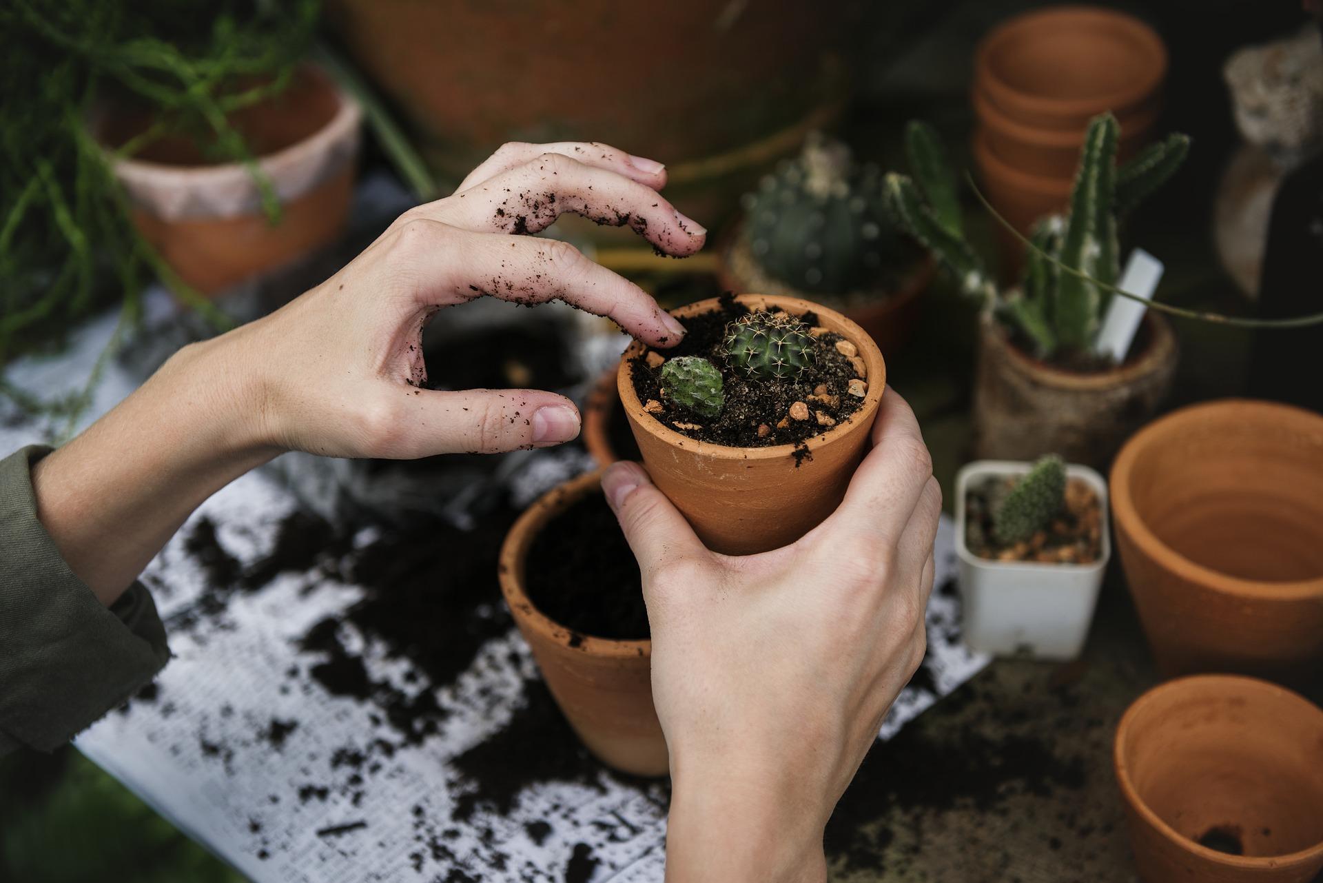 Comment entretenir ses plantes vertes ?