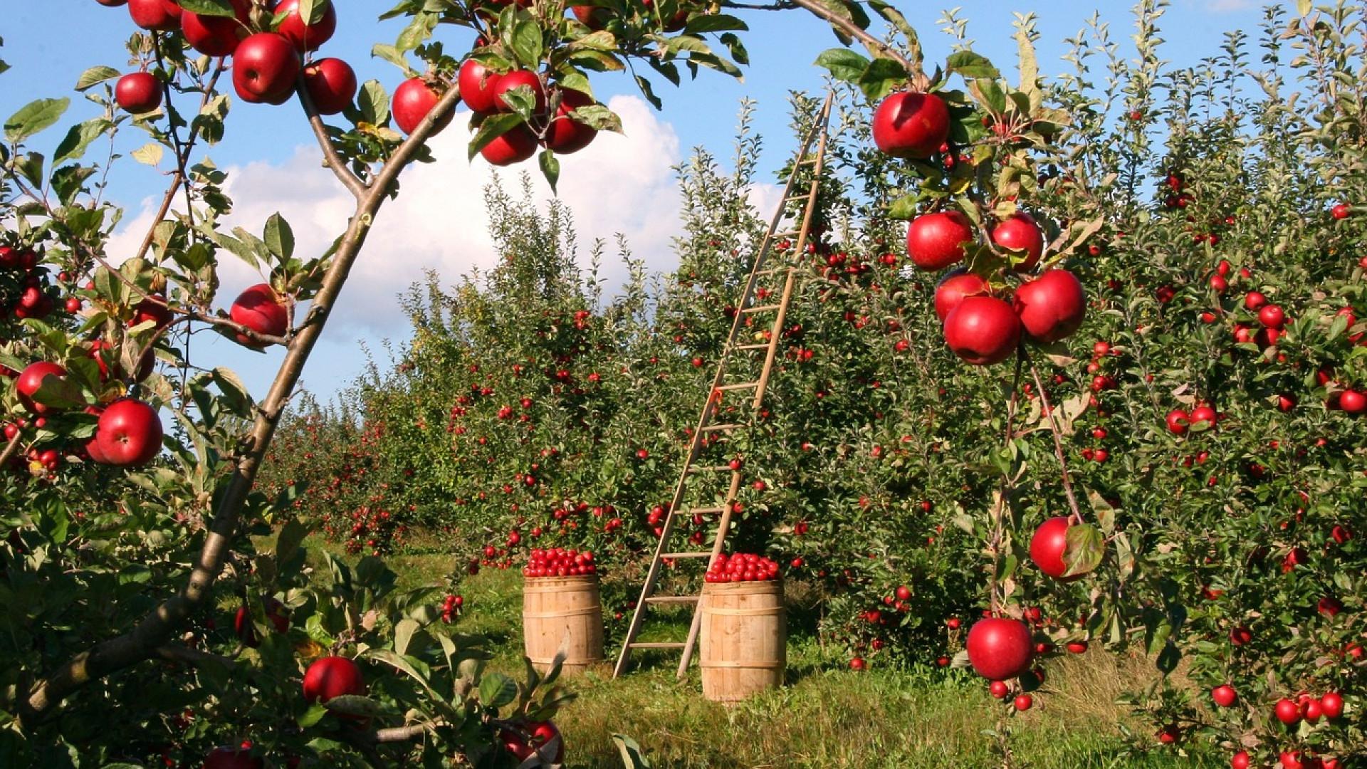 Comment choisir ses bordures de jardin?