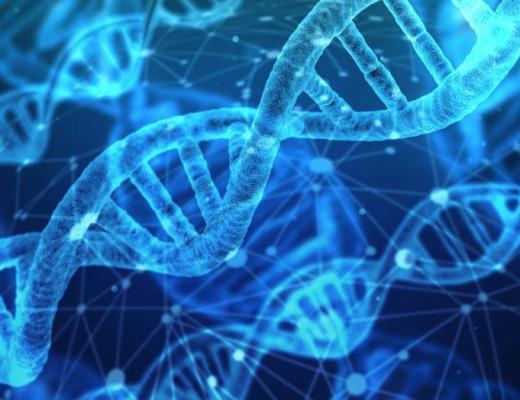 L'ADN et ses nombreuses possibilités
