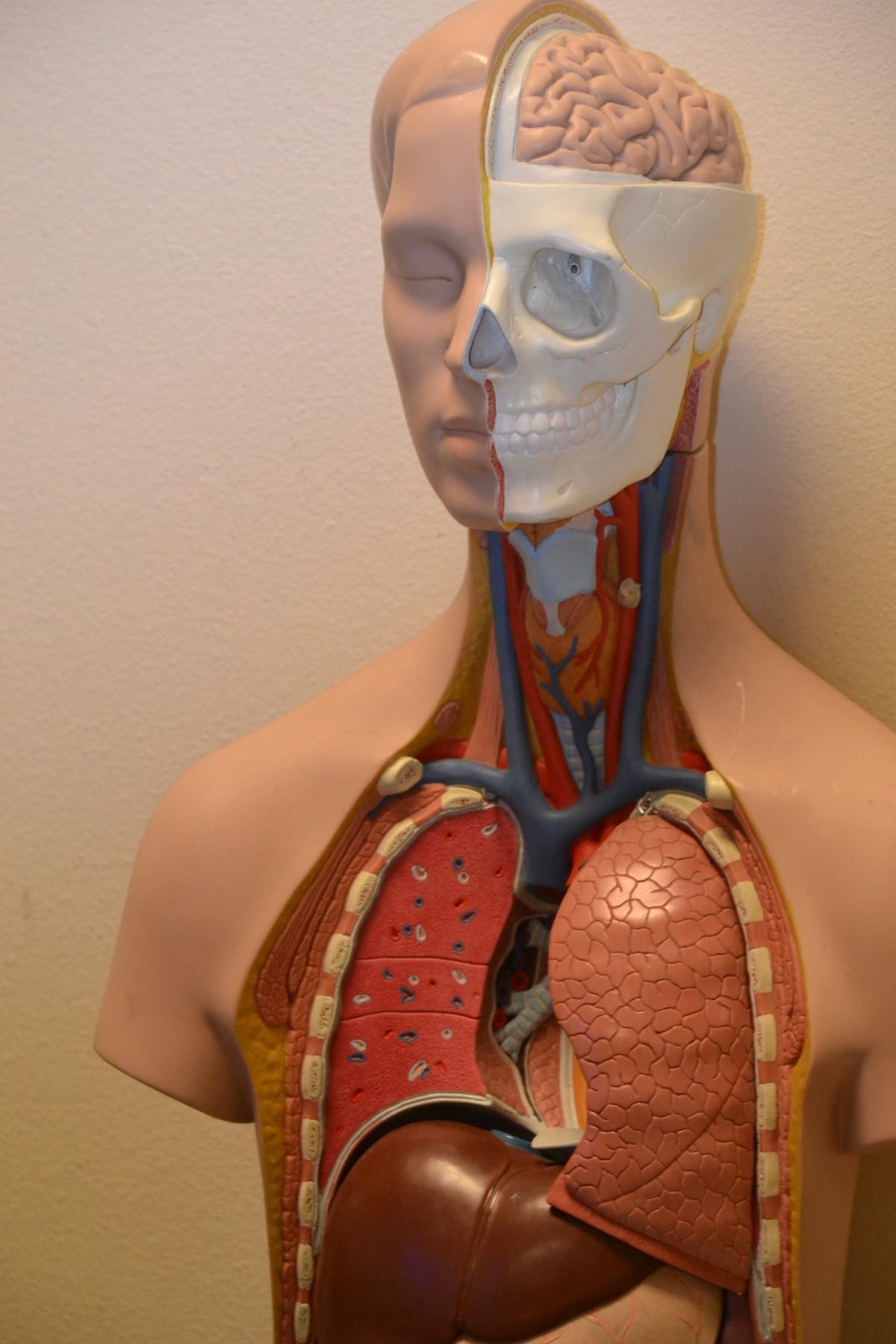 Quelles sont les causes de la Costochondrite ou du syndrome de Tietze ?