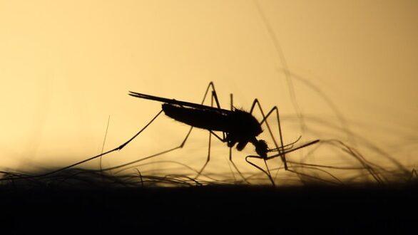 Prise à ultrason vs bougie anti-moustique