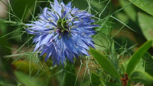Les plantes médicinales offrent de nombreux bienfaits naturels